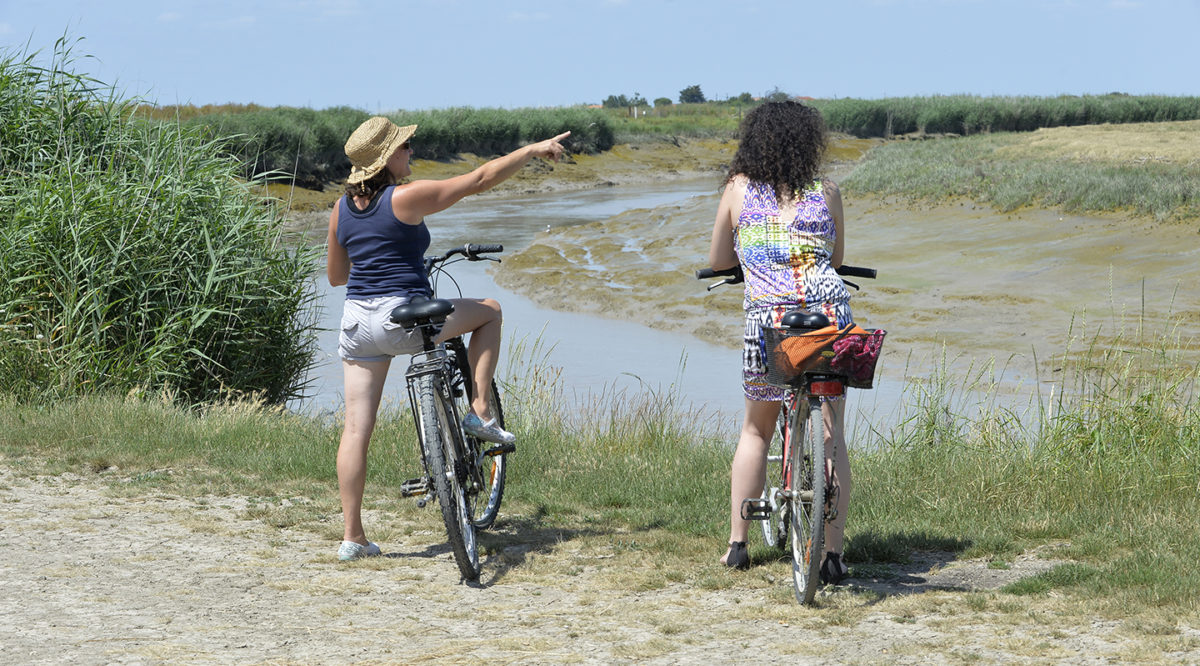Bicyclette en bordure de Baie de l'Aiguillon