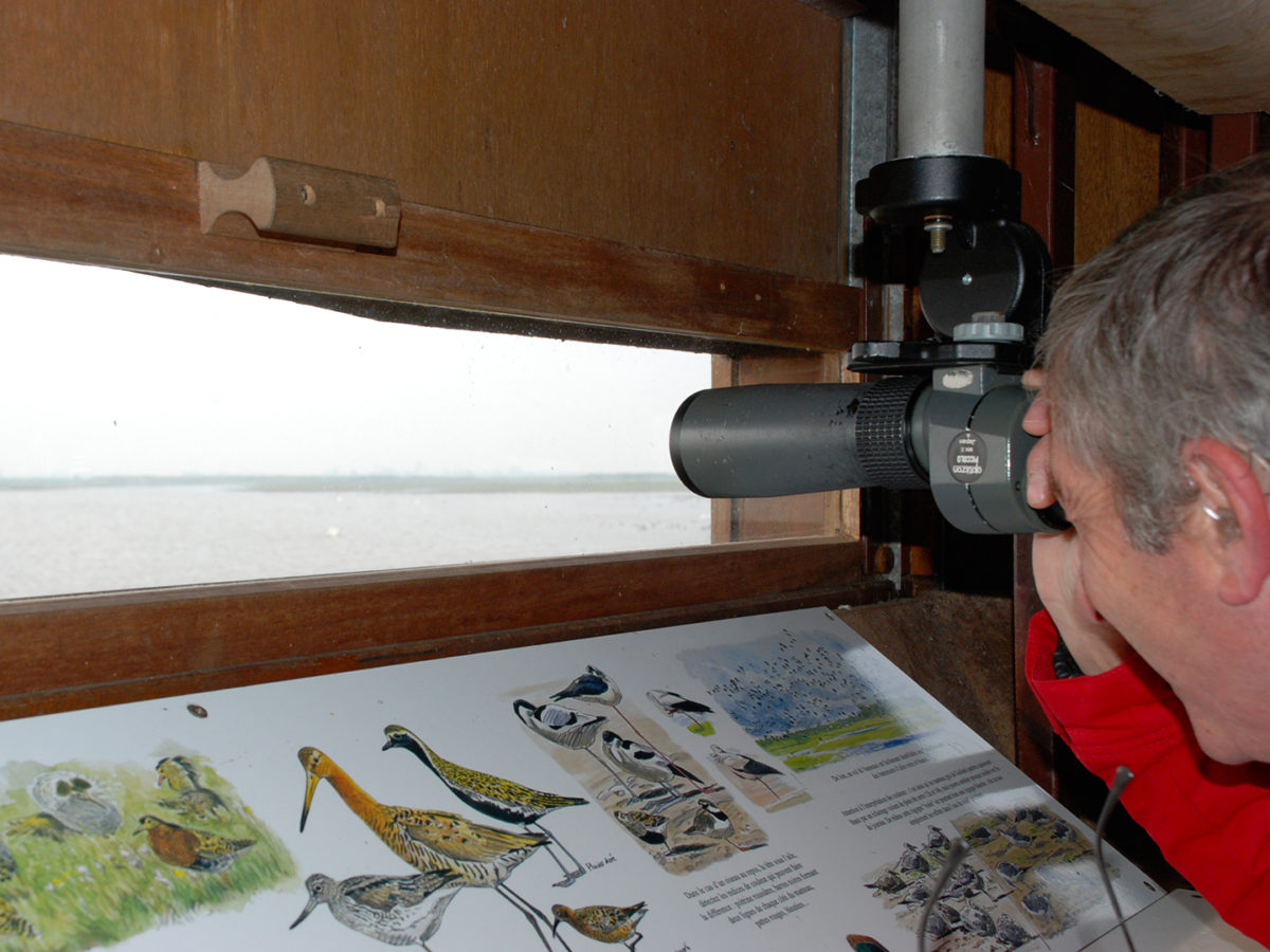 De nombreux sites permettent d'observer la faune