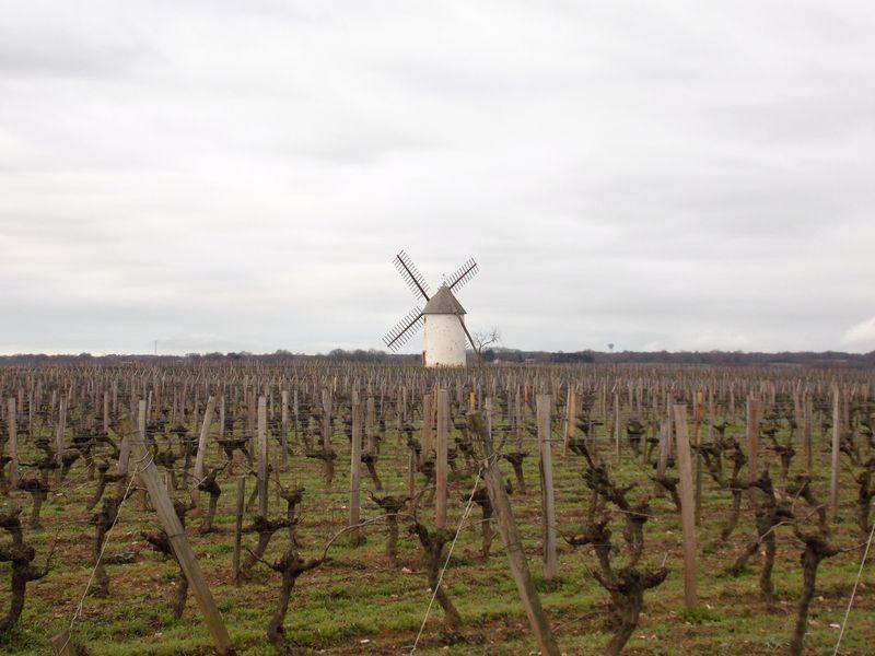 Original Vélo Tour – Dans les vignes de Rosnay 1