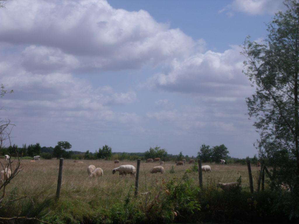 communal-vouille-les-marais-85-pna-1