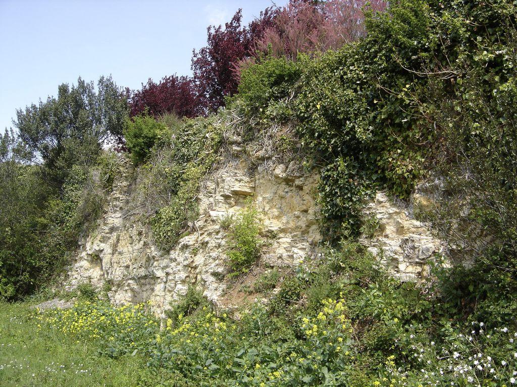 coteau-calcaire-chaille-les-marais-85-pna-2