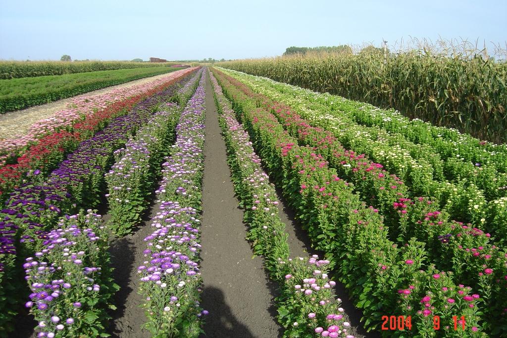 vendee-fleurs-le-gue-de-velluire-85-deg-2